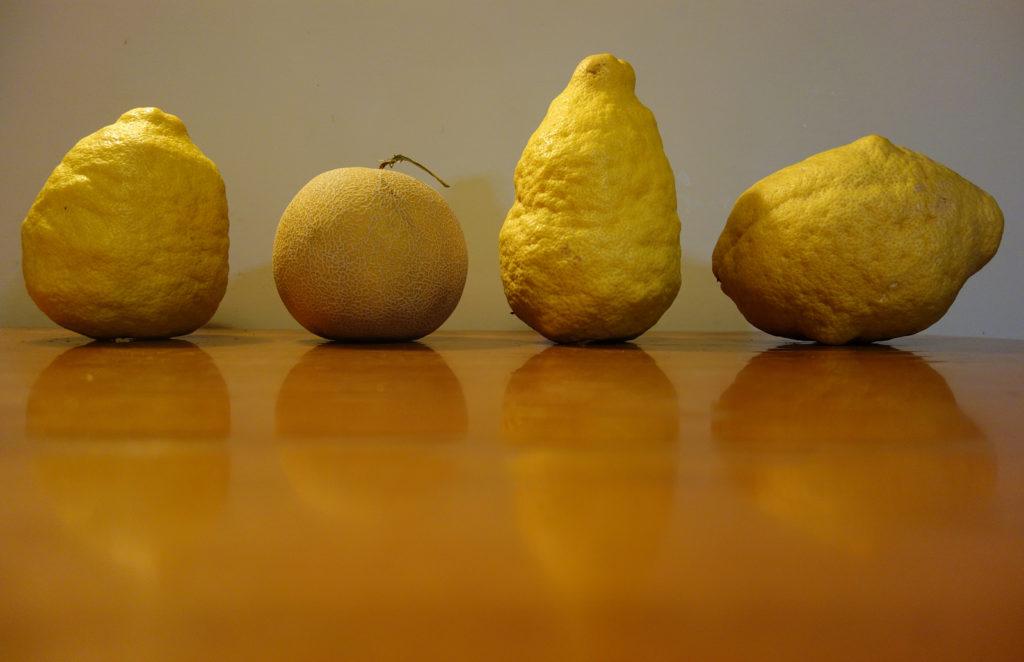 lemonvsmelon